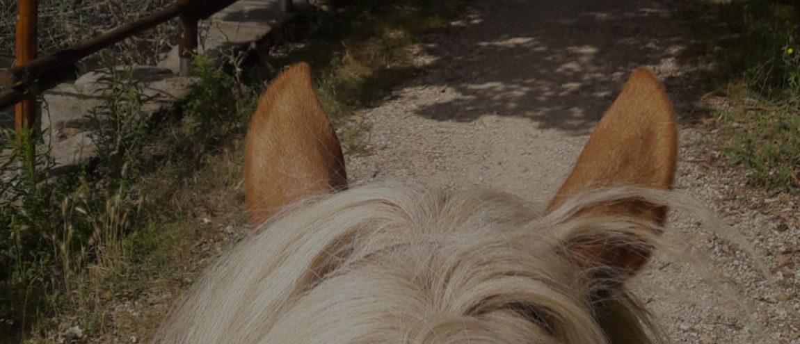 home-cavalli.jpg