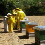 Una giornata da apicoltore