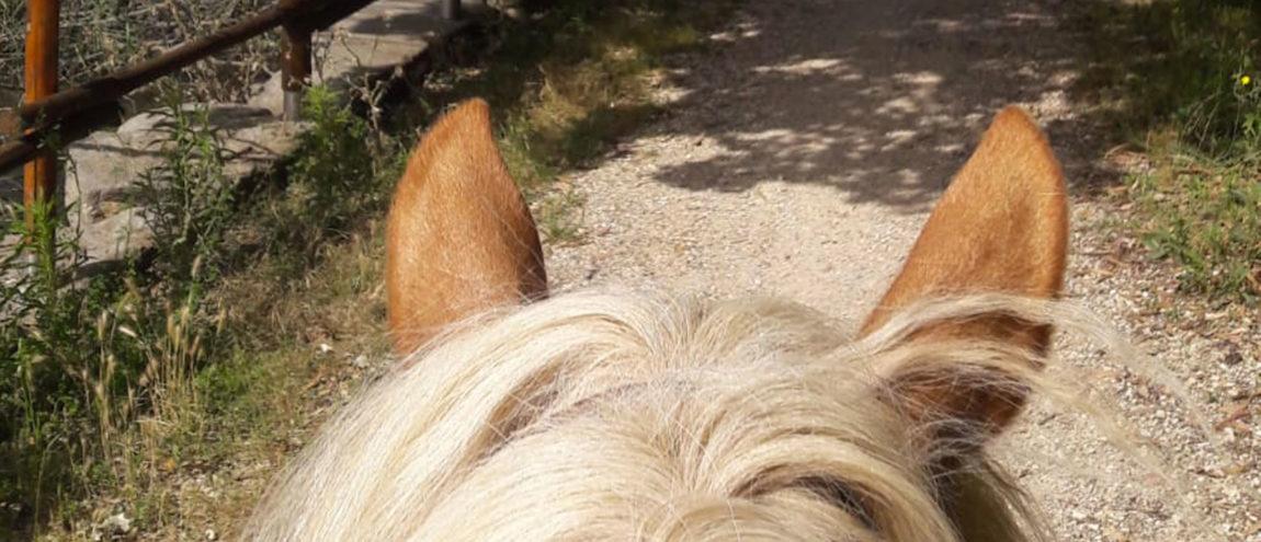 cavallo-link.jpg