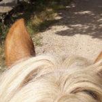 A cavallo sui sentieri di Annibale