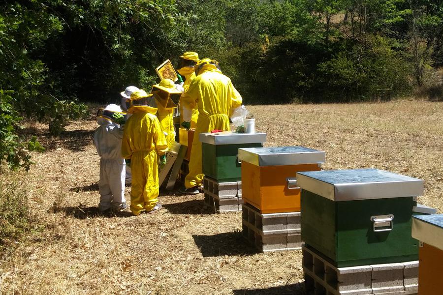 Una-giornata-da-apicoltore.jpg