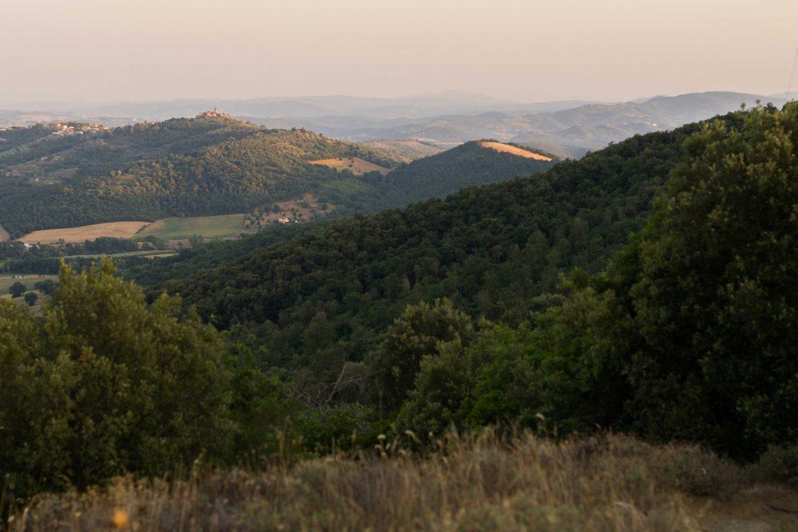 Nei-bosci-del-Monte-Penna_Daniele-Toccacelo-scaled.jpg